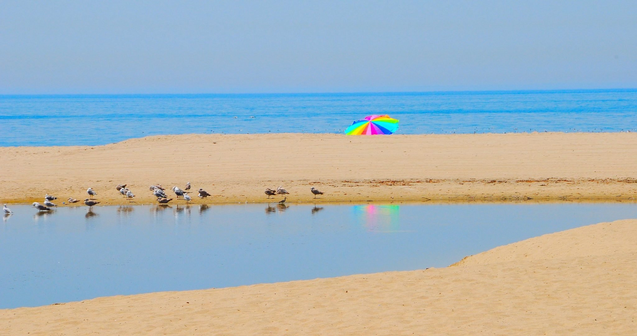 Beach with birds and colorful umbrella in the background